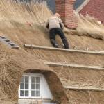 Vroeger werd de rieten dakbedekking als goedkope oplossing gebruikt voor dakbedekking voor bijvoorbeeld boerderijen.©Henner Damke - Fotolia