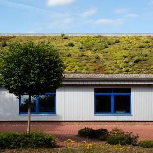 De vegetatie op groendaken bestaan uit vier lagen en hebben veel voordelen.©Peter Borrmann